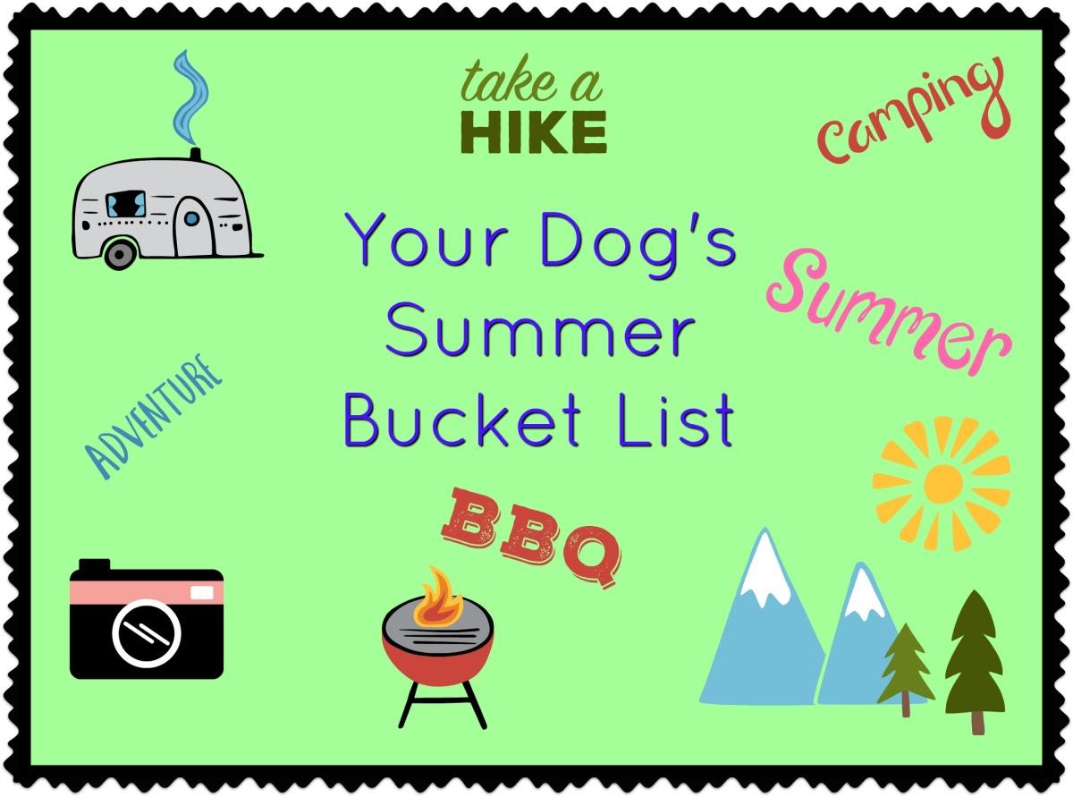 Your Dog's Summer BucketList
