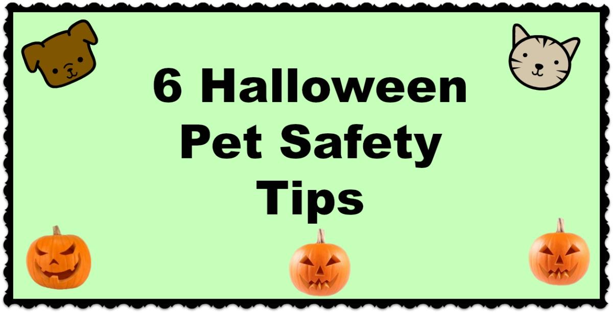 6 Halloween Pet SafetyTips