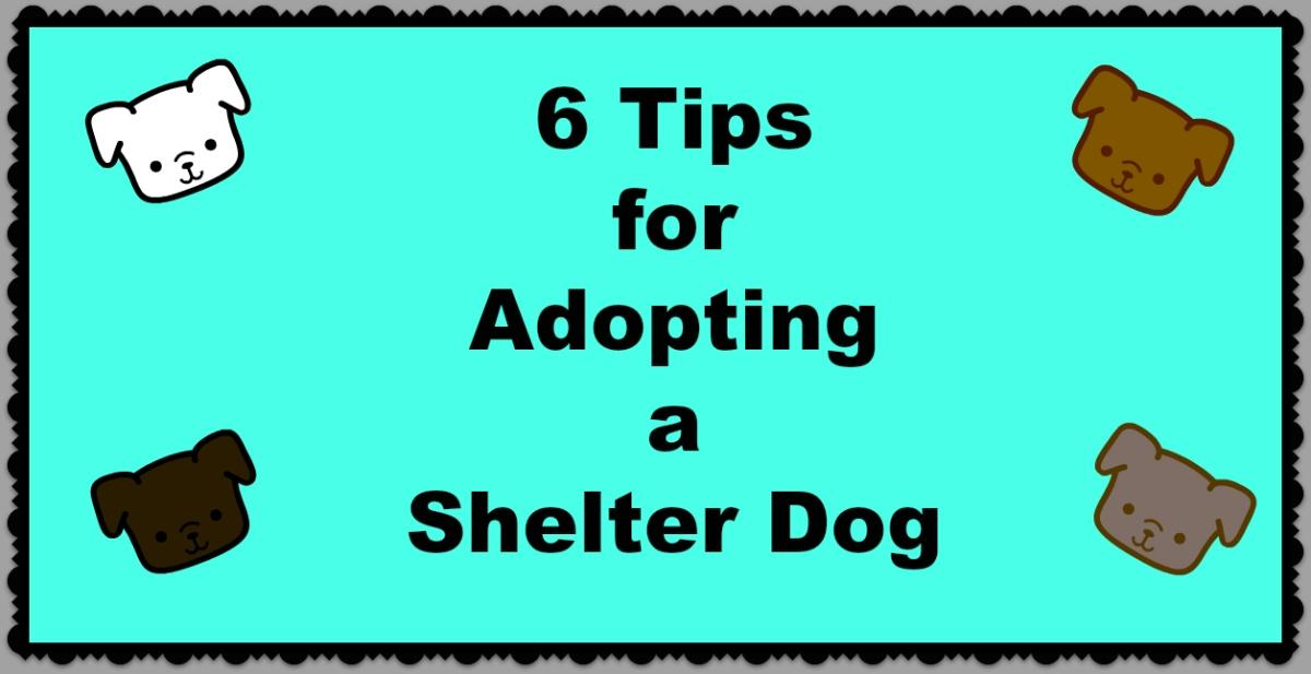 6 Tips for Adopting a ShelterDog