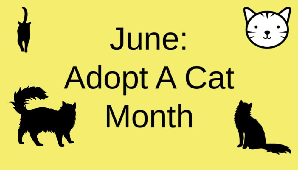 June: Adopt A CatMonth