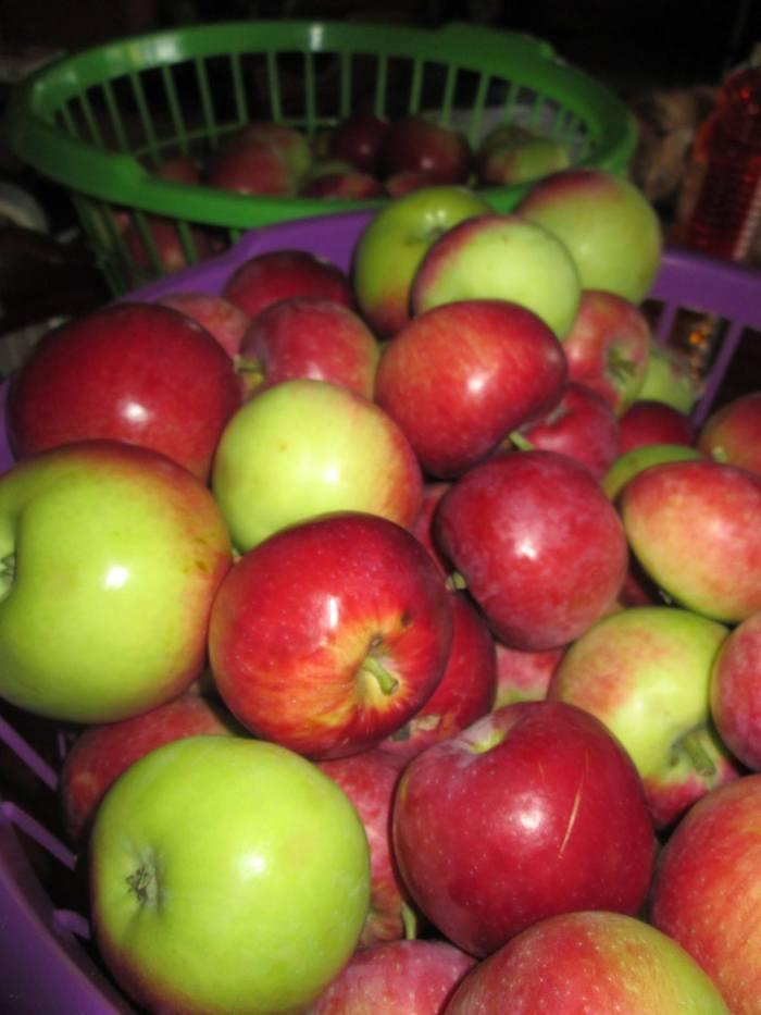 Benefits of ApplePicking