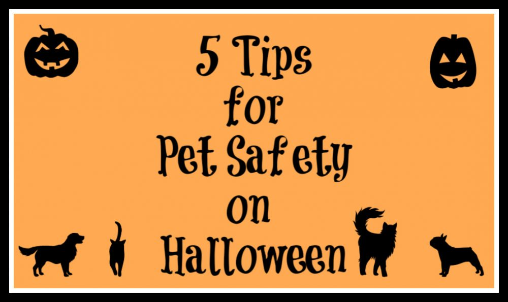 5 Tips for Pet Safety onHalloween