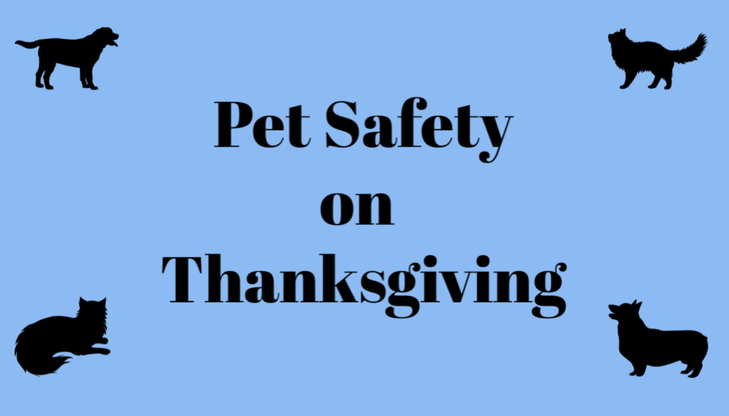 Pet Safety on Thanksgiving