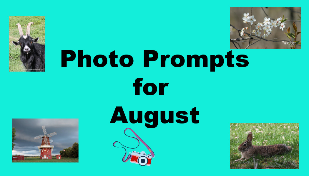 Photo Prompts for August