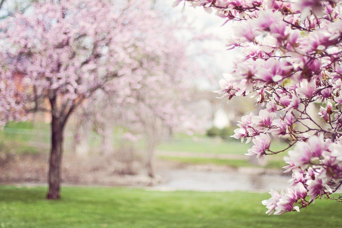 April Photo Prompts
