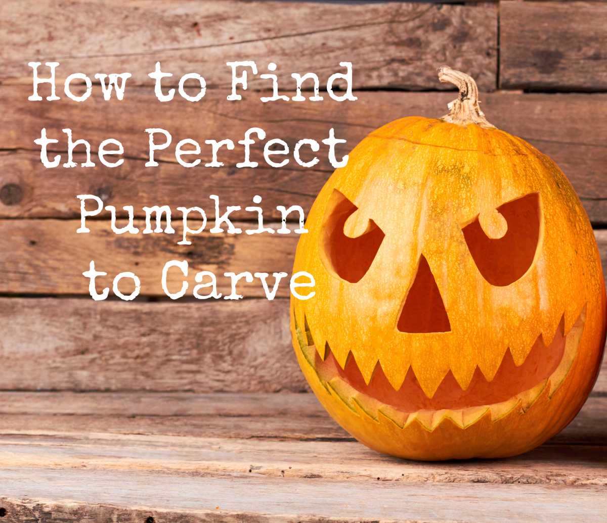 How to Find the Perfect Pumpkin toCarve